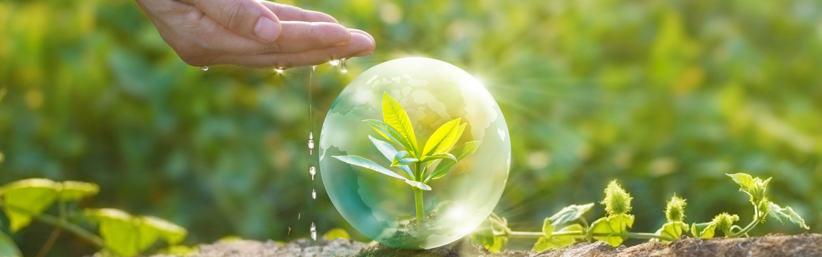 Hand and plant in a water bubble and hand