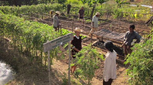 People planting Tapia in Madagascar